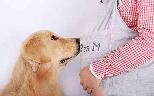 科普讲堂 | 孕妈关心:怀孕期间到底能不能养宠物?